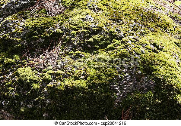Moss - csp20841216
