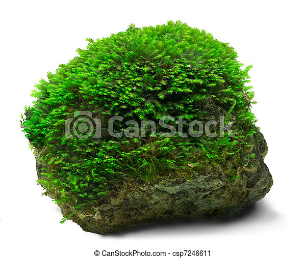 Moss y rock - csp7246611