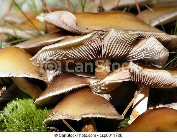 Mushroom Closeup - csp0011726