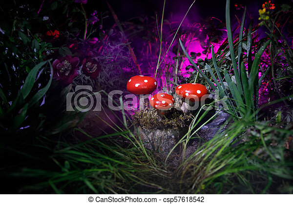 Mushroom. Fantasy Glowing Mushrooms in mystery dark forest close-up. Amanita muscaria, Fly Agaric in moss in forest. Magic mushrooms background - csp57618542