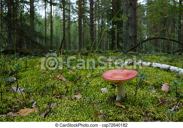 mushroom growing in the forest - csp72640182