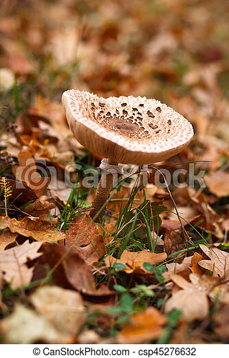 Mushroom growing in the forest - csp45276632