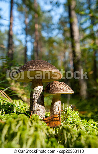 Mushroom in the forest - csp22363110