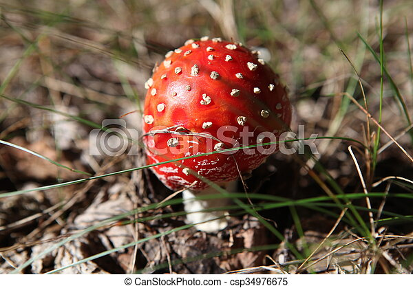 mushroom in the forest - csp34976675
