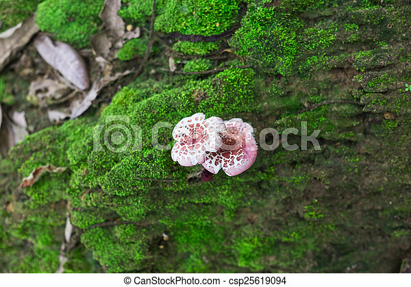 mushroom in the forest - csp25619094