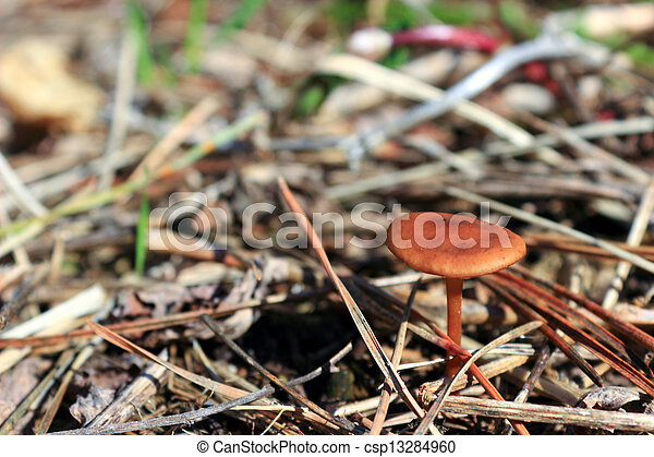 Mushroom in the grass - csp13284960