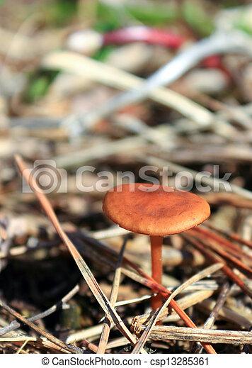 Mushroom in the grass - csp13285361