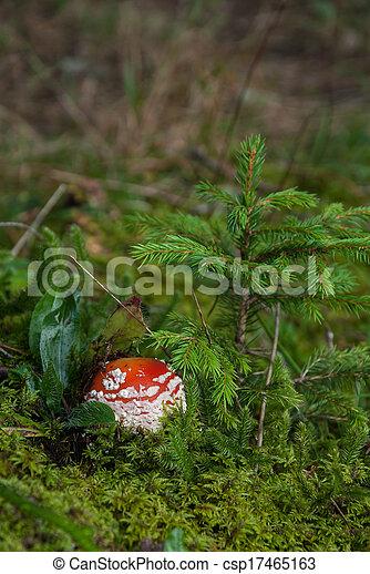 Mushroom in the grass - csp17465163