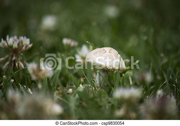Mushroom in the grass - csp9830054