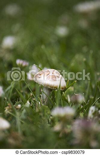 Mushroom in the grass - csp9830079