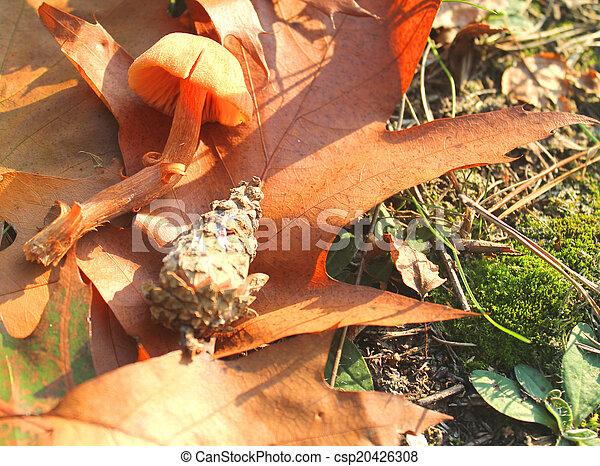 mushroom in the grass - csp20426308