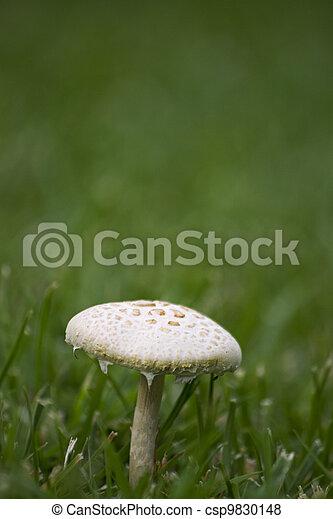 mushroom - csp9830148