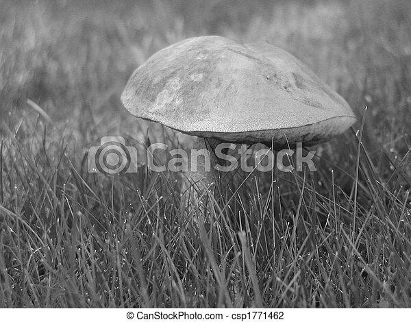 Mushroom - csp1771462