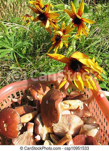Mushrooms and flowers - csp10951533