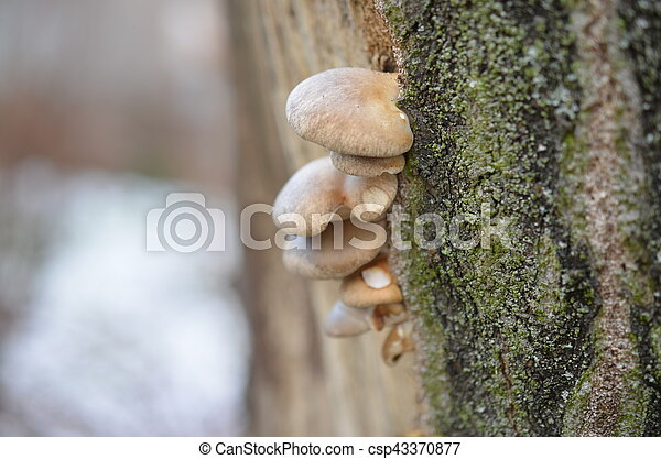 mushrooms growing on tree with moss - csp43370877