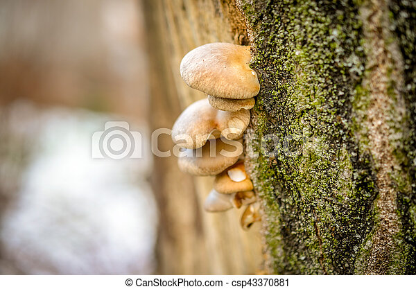 mushrooms growing on tree with moss - csp43370881