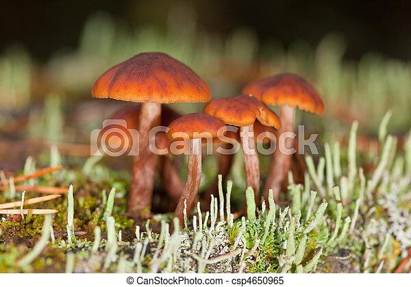 mushrooms in a moss - csp4650965