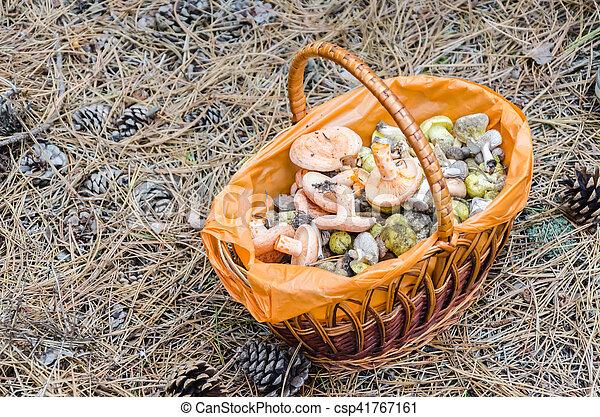 Mushrooms in a wicker basket - csp41767161