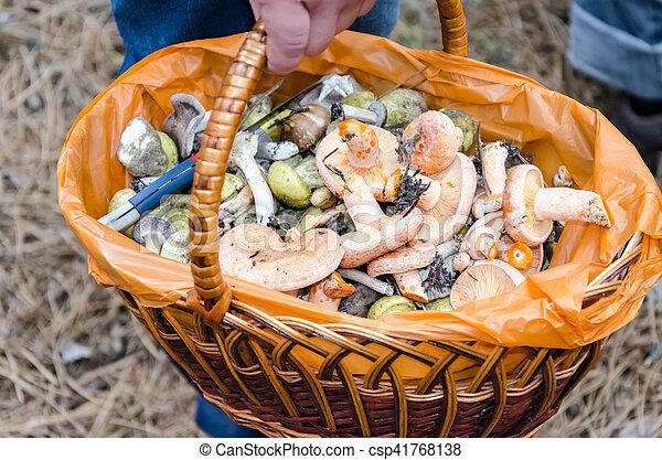 Mushrooms in a wicker basket - csp41768138