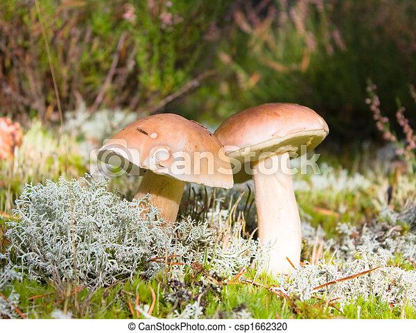 mushrooms in the moss - csp1662320