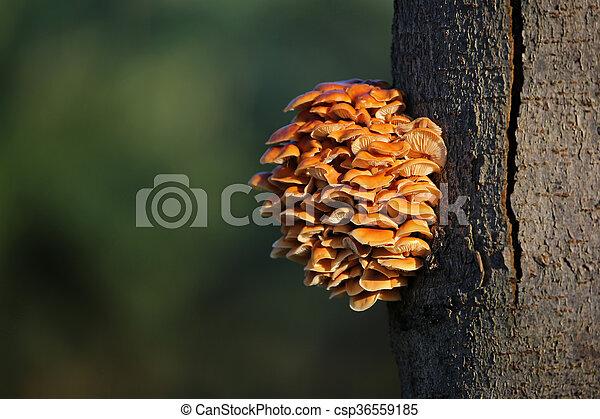 Mushrooms on a tree - csp36559185