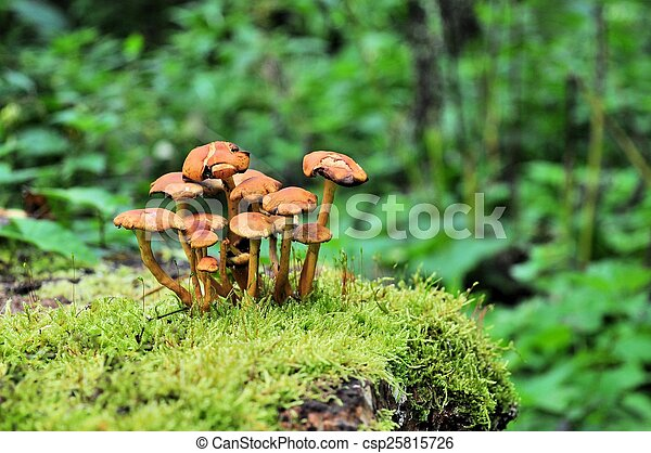 Mushrooms on moss in a forest - csp25815726