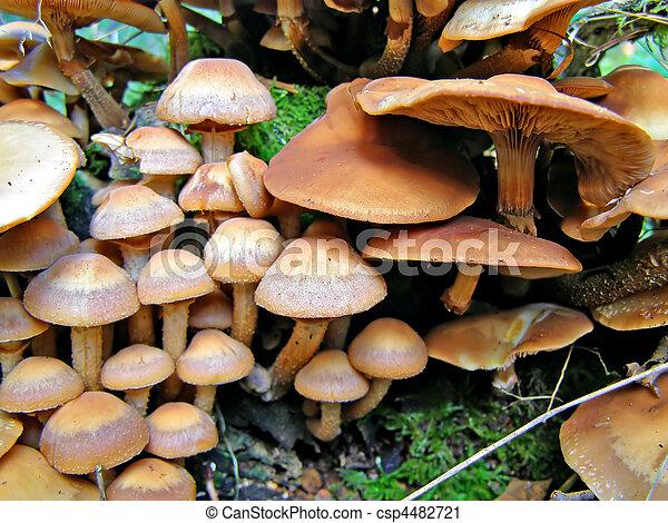 mushrooms on stump tree - csp4482721