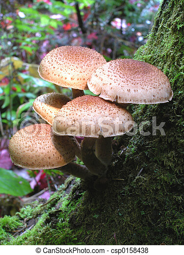 Mushrooms on Tree - csp0158438