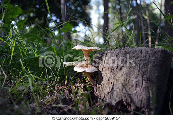 Mushrooms on tree - csp45659154