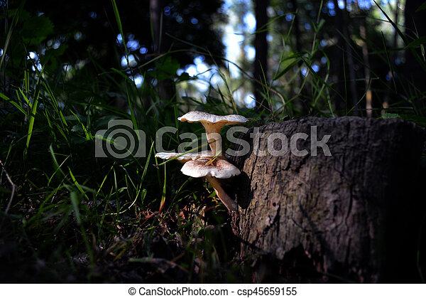 Mushrooms on tree - csp45659155