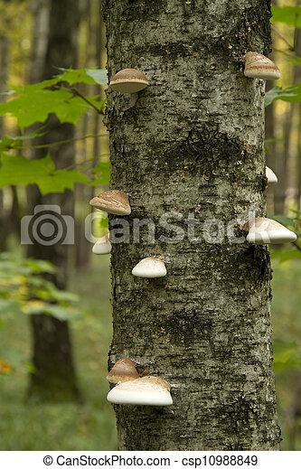 mushrooms on tree - csp10988849