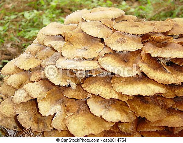 Mushrooms2 - csp0014754