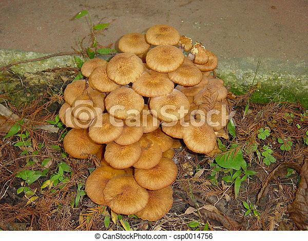 mushrooms3 - csp0014756