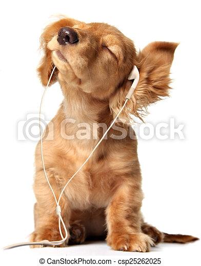 Musical puppy - csp25262025