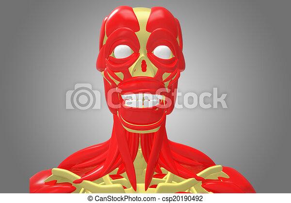 Muskeln, skelett, gesicht. Previously, bewegung, menschen ...