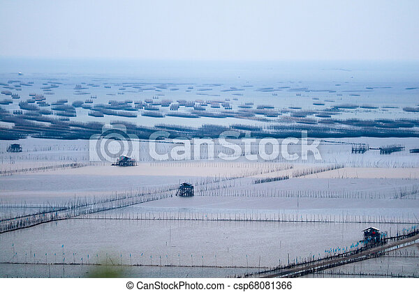 Mussel farm in sea along the mangrove forest - csp68081366