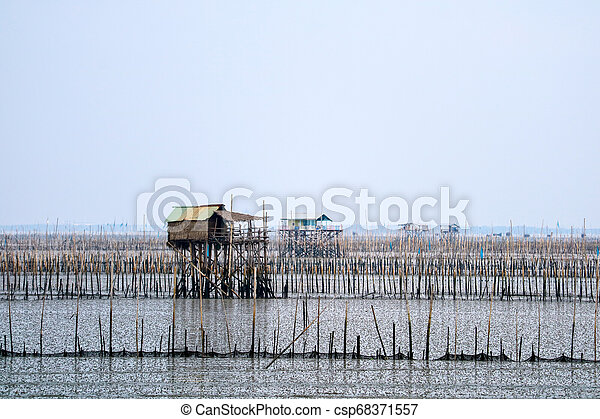 Mussel farm in sea along the mangrove forest - csp68371557