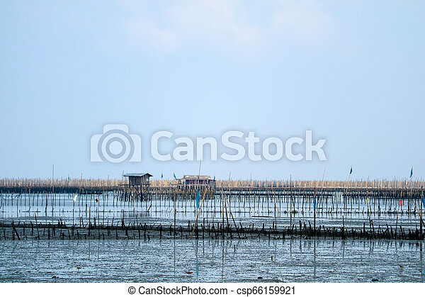 Mussel farm in sea along the mangrove forest - csp66159921