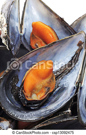 mussels - csp13092475