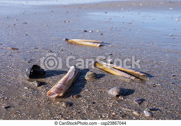 mussels still life - csp23867044