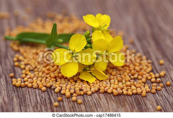 Mustard flower with seeds - csp17486415