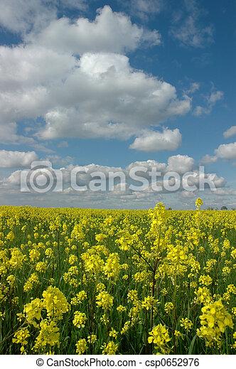 Mustard flowers under white clouds mustard flowers under puffy mustard flowers under white clouds csp0652976 mightylinksfo