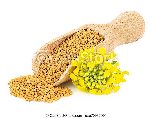 mustard seeds in wooden scoop - csp70932091