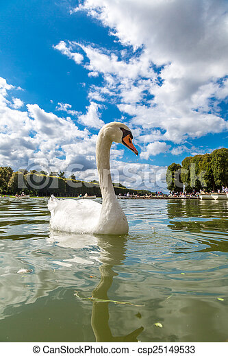Mute Swan on a lake - csp25149533