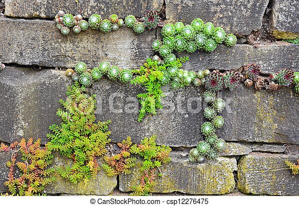 Bakstenen Muur Tuin : Muur tuin. planten oud tuinmuur groeiende baksteen uit.