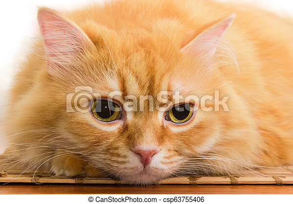 Muzzle of ginger cat lying on wooden surface close-up - csp63755406