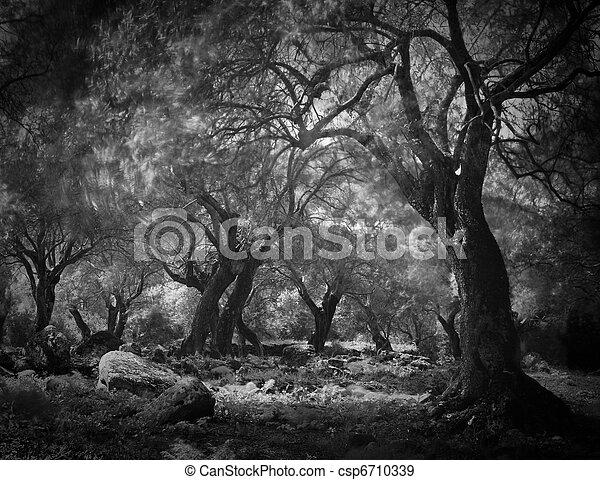 mysterious dark forest - csp6710339