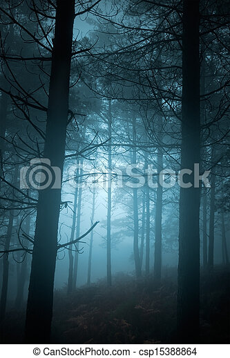 Mysterious Forest - csp15388864