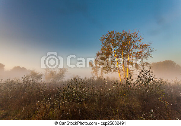 Mysterious morning time in swamp area - csp25682491
