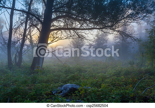 Mysterious morning time in swamp area - csp25682504